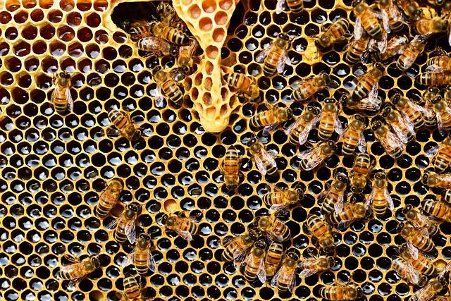Pria toetus mesinduse arendamiseks. Õigusabi osutamine ja advokaadibüroo advokaat selgitab.